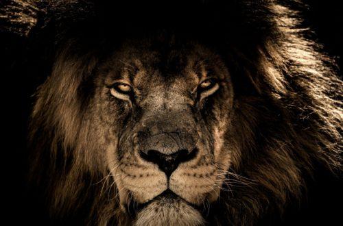 Article : CAN 2019 : Les lions blessés, comme indomptables